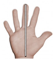 Turtleskin Hands Length Measurement